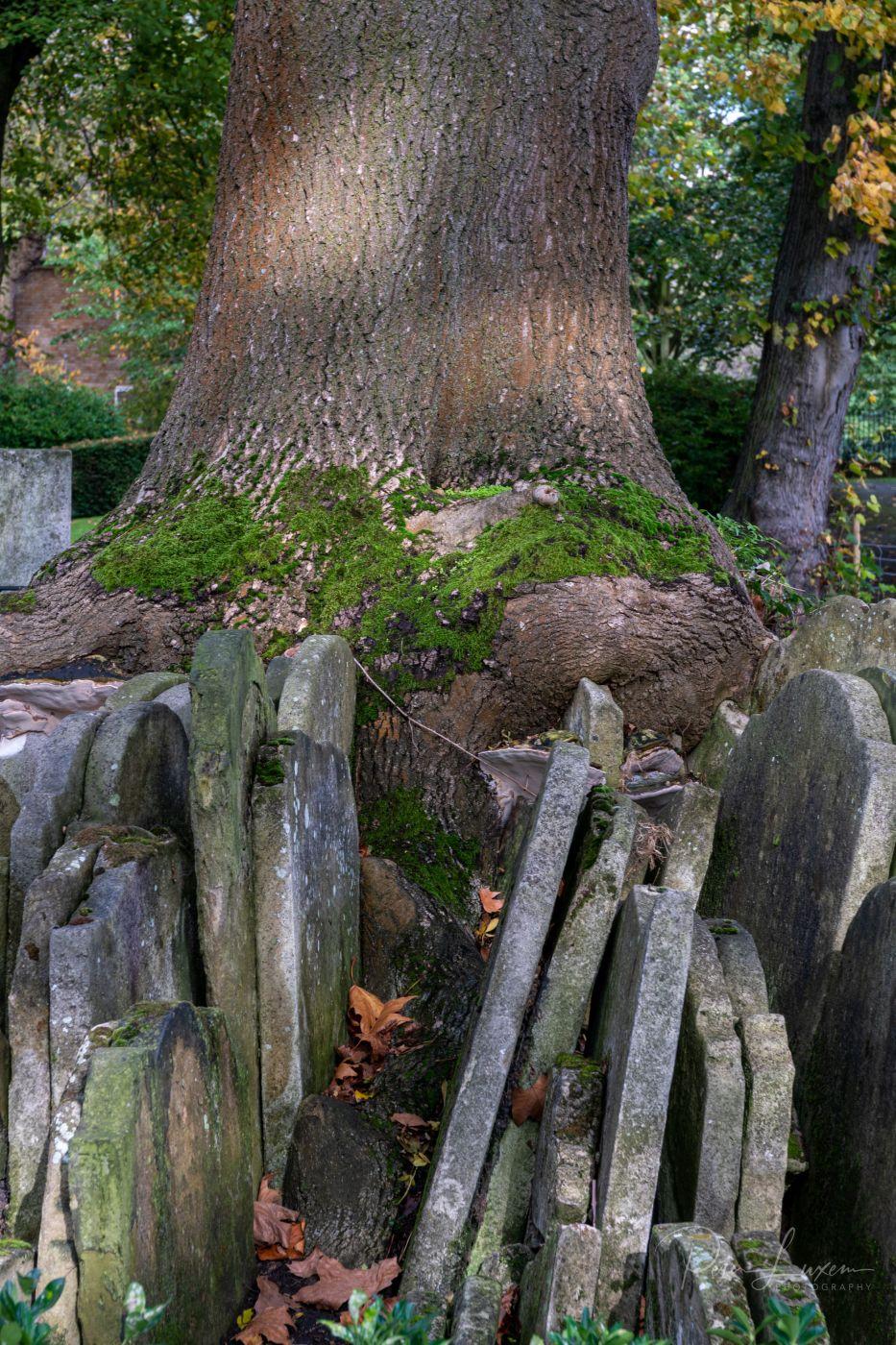 The Hardy Tree, United Kingdom