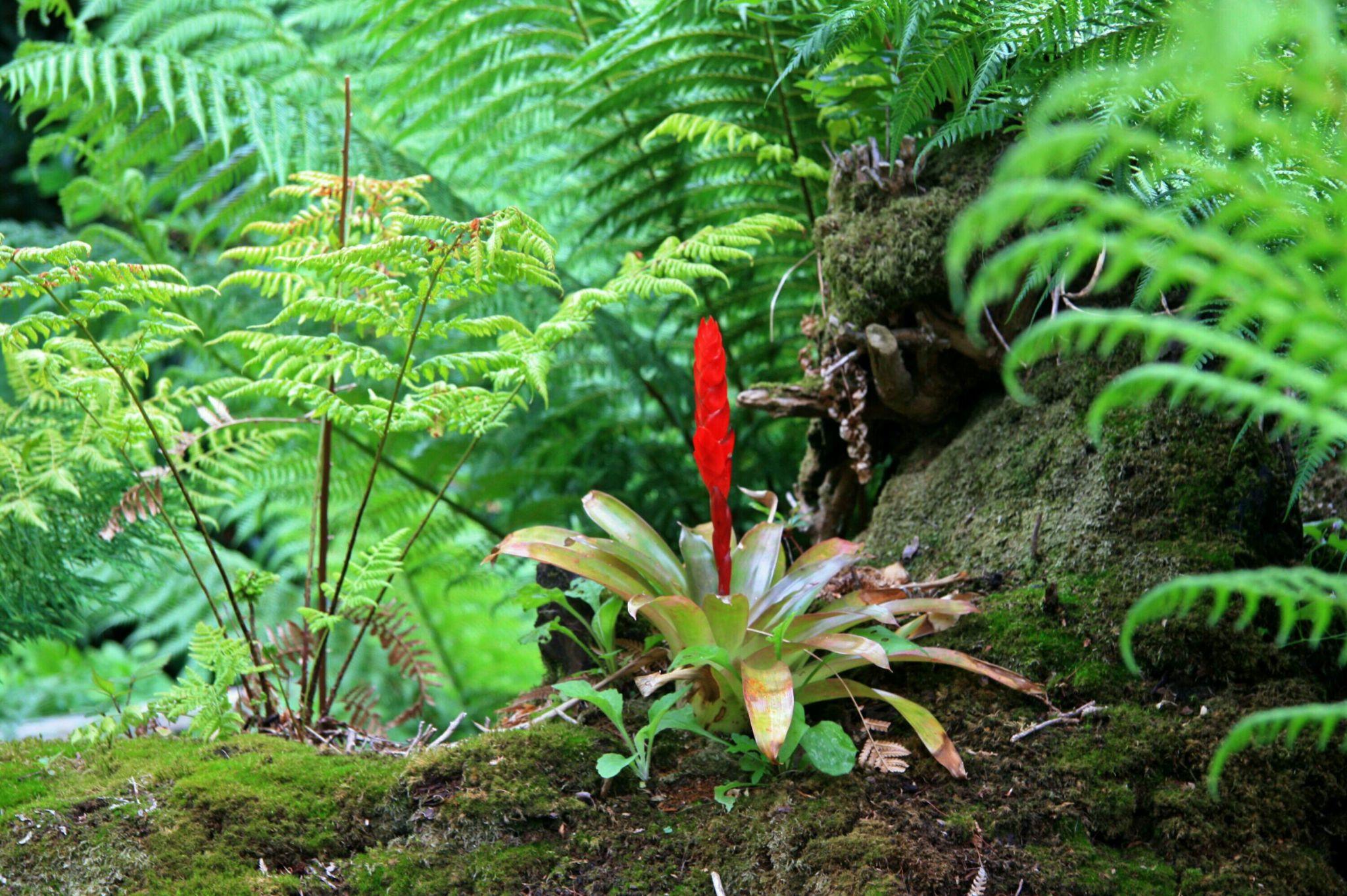 The Lost Gardens Heligan, United Kingdom