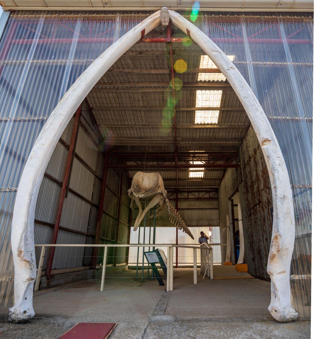 Whale Skeleton whaling Station Albany Western Australia, Australia