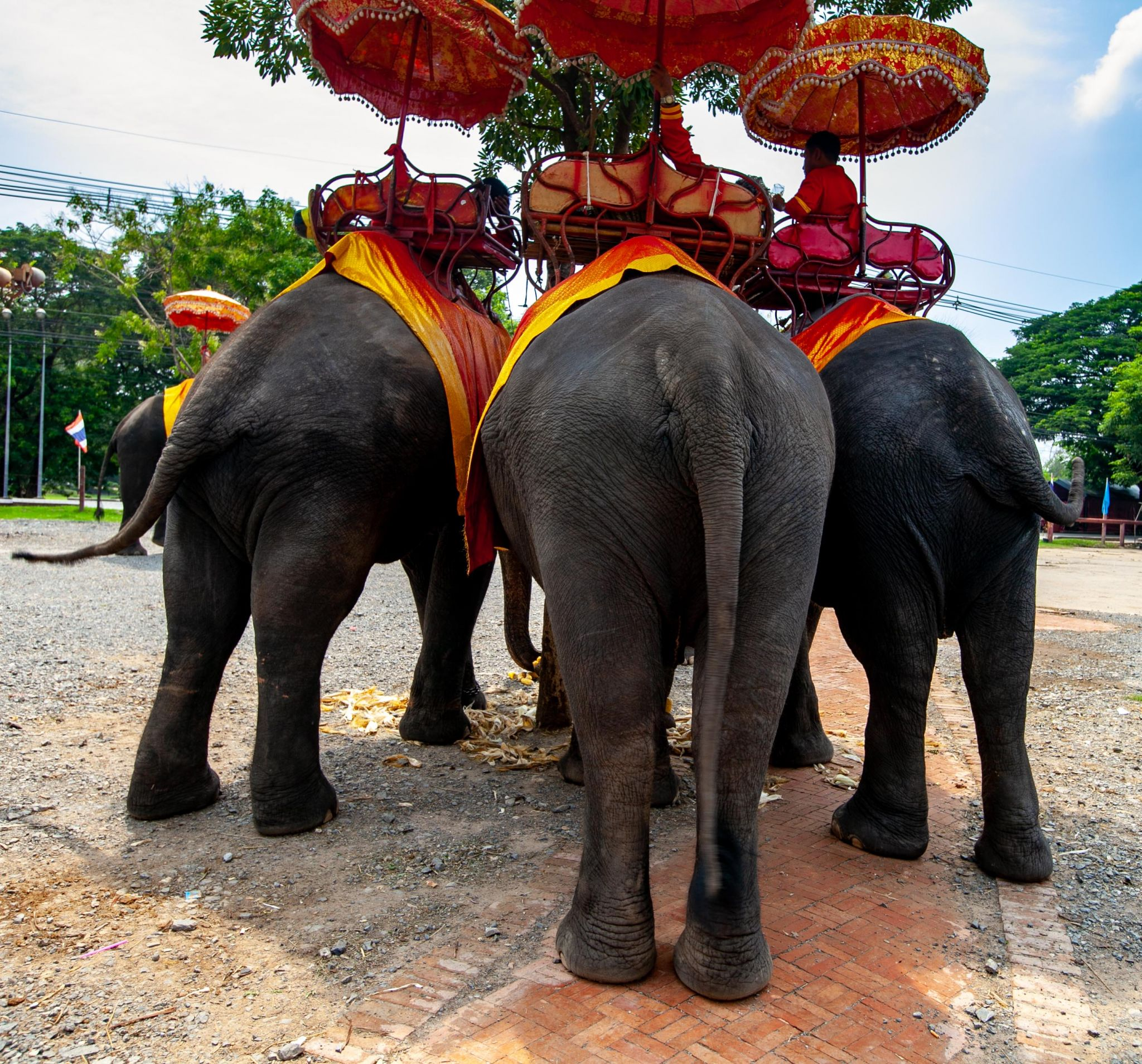 Ayutthaya ancient city elephant rides, Thailand