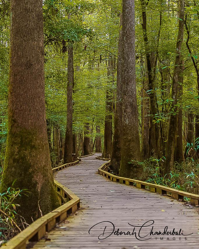 Boardwalk Loop Trail, Congaree National Park, South Carolina, USA