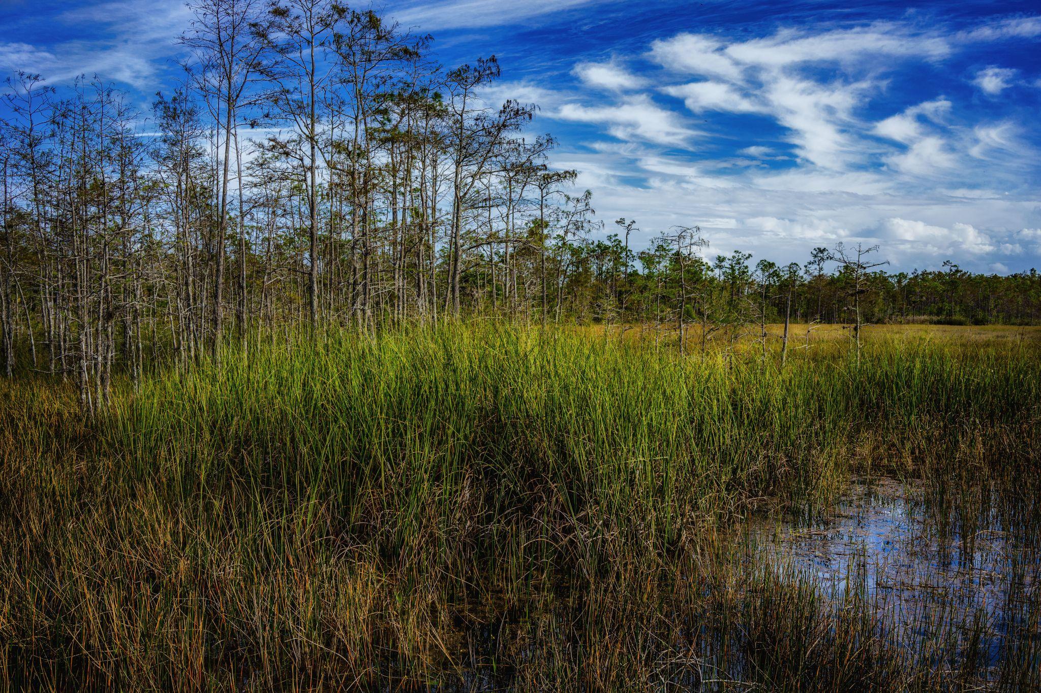 Grassy Waters Preserve, Florida, USA