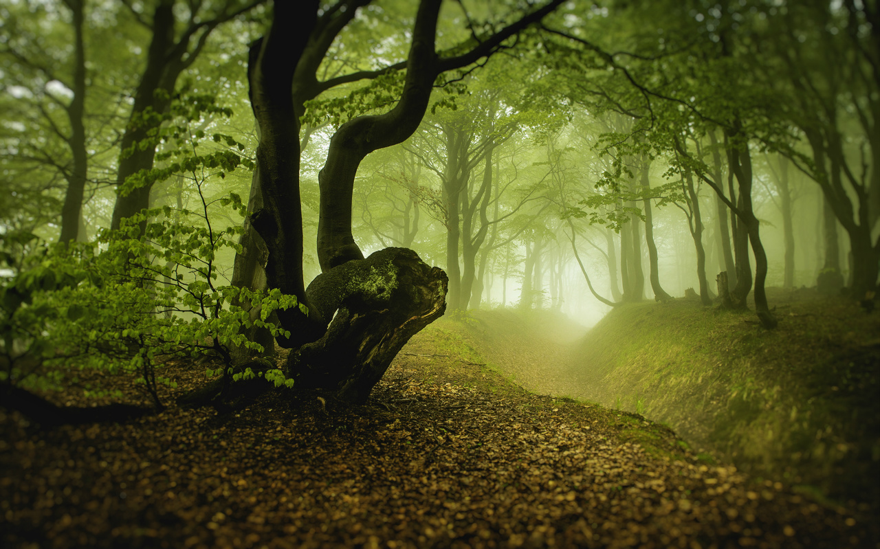 mysterious forest, Czech Republic