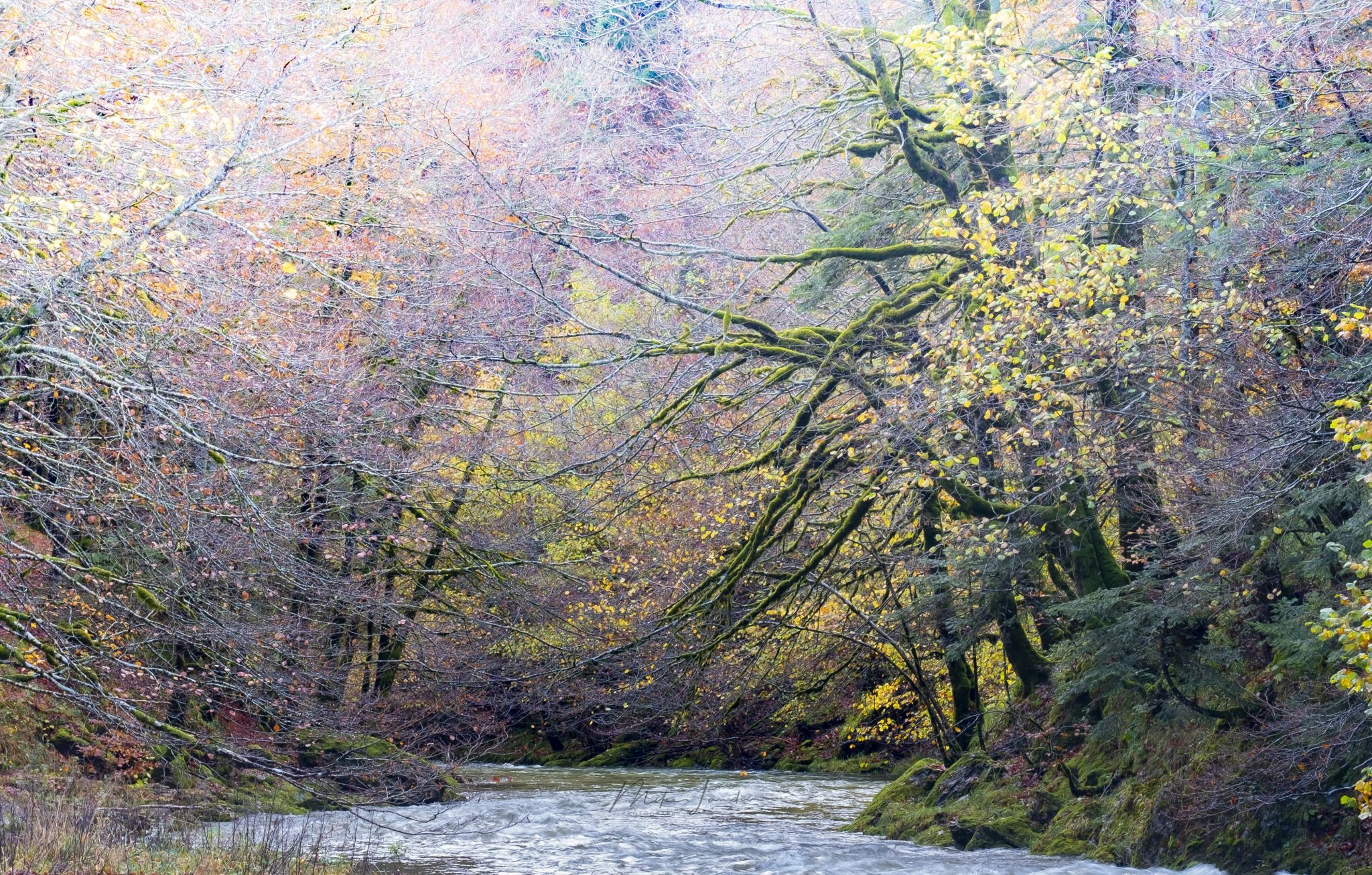 Selva de Irati - Irati forest, Spain