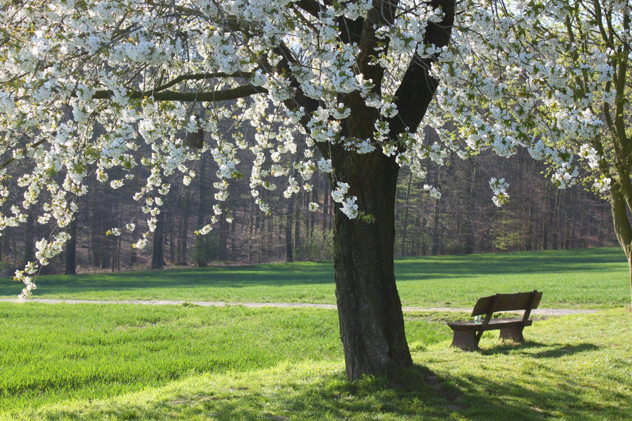 Frühling in den Baumbergen, Germany