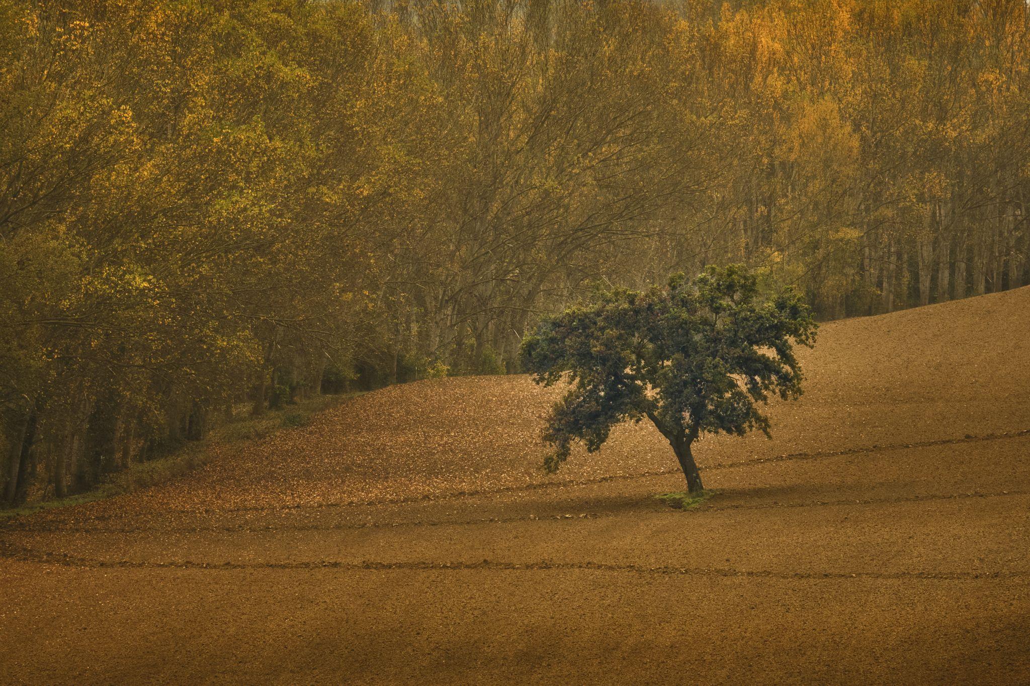 Tree on the field, Italy