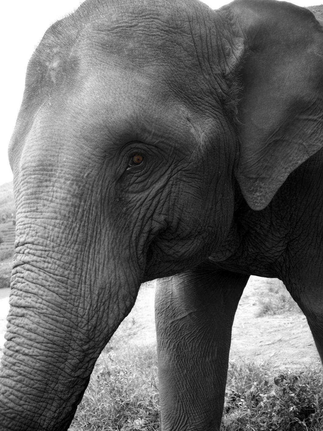 Chiang Mai - Elephant Sanctuary, Thailand