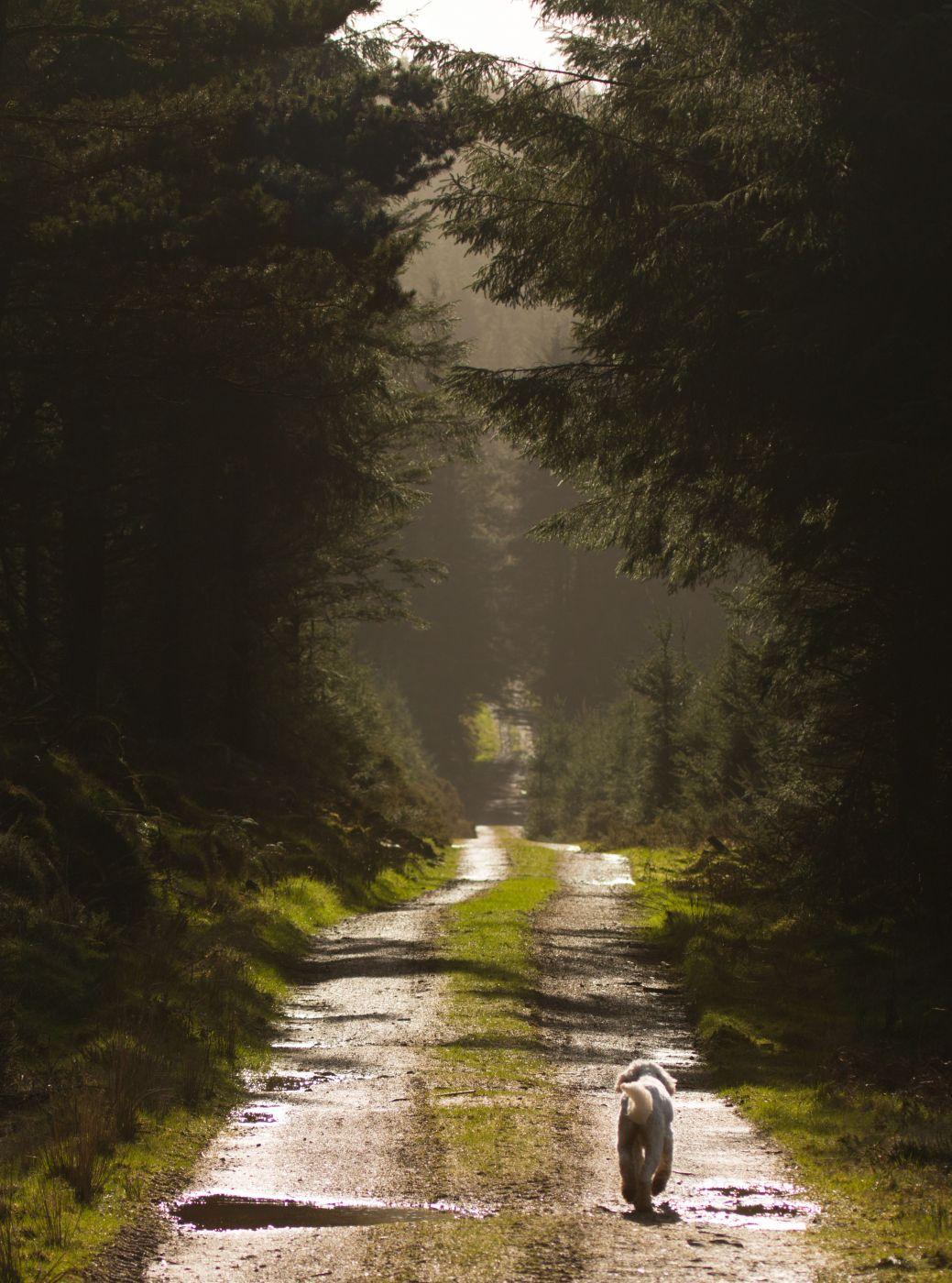 Croghan forest walk, Ireland