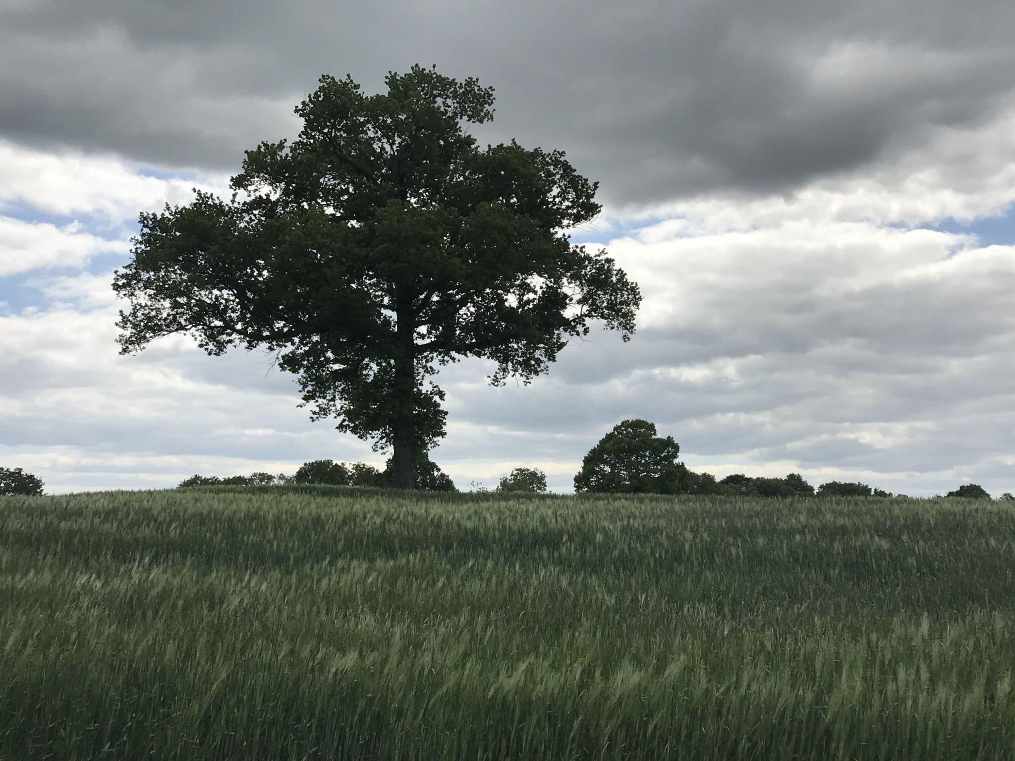 English countryside, United Kingdom