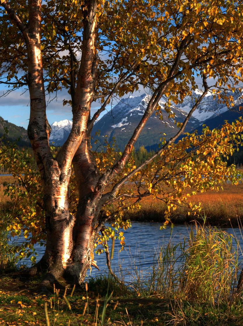 Tern Lake, Kenai Peninsula, Alaska, USA