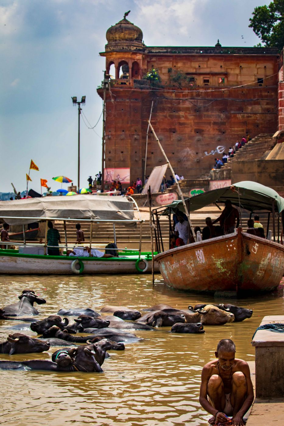 Buffalo cooling off in the Ganges Varanasi, India