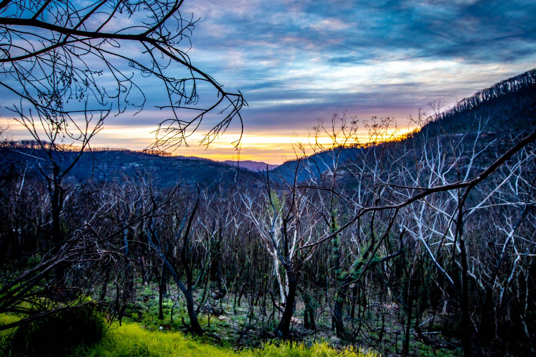 Burnt Bush sunrise Mt Banks New South Wales, Australia