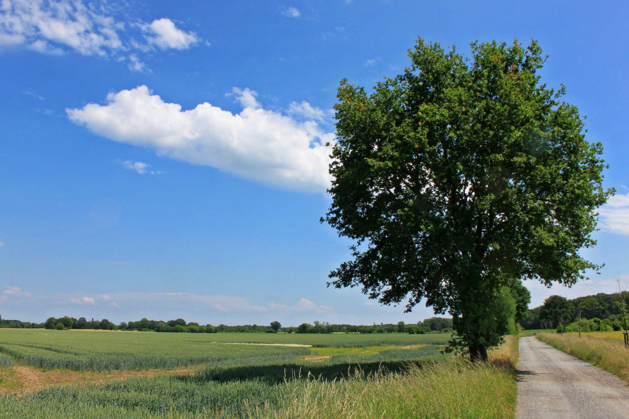 Münsterländer Parklandschaft bei Havixbeck, Germany