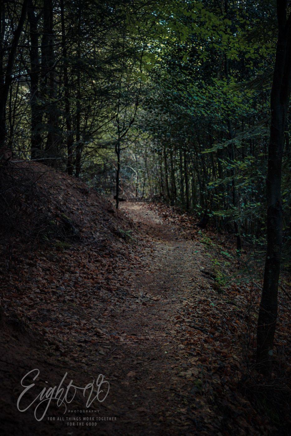 Black Forest Trails Near Merkurturm Baden-Baden, Germany
