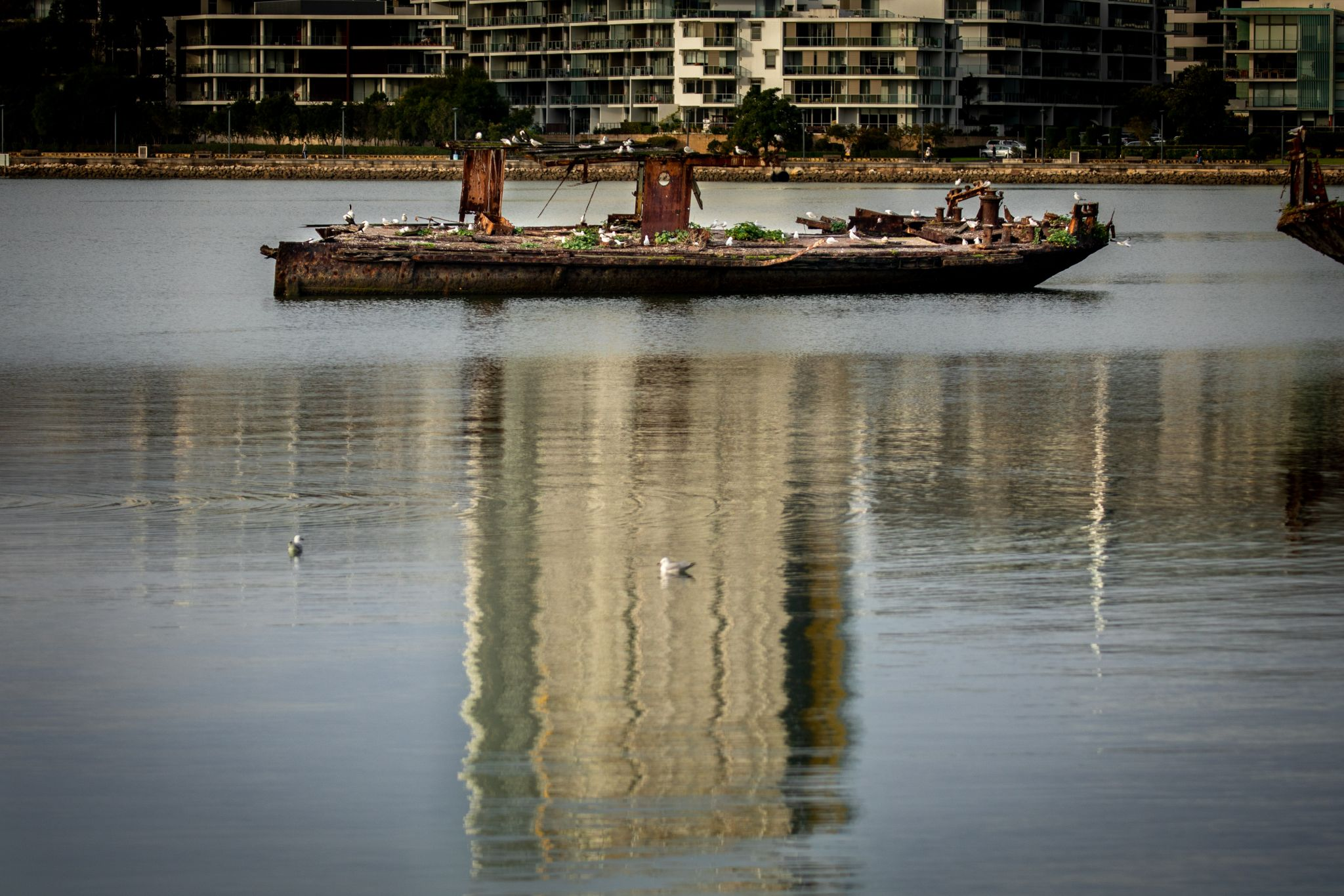 Shipwreck & reflection of SS Mortlake Sydney Olympic Park, Australia
