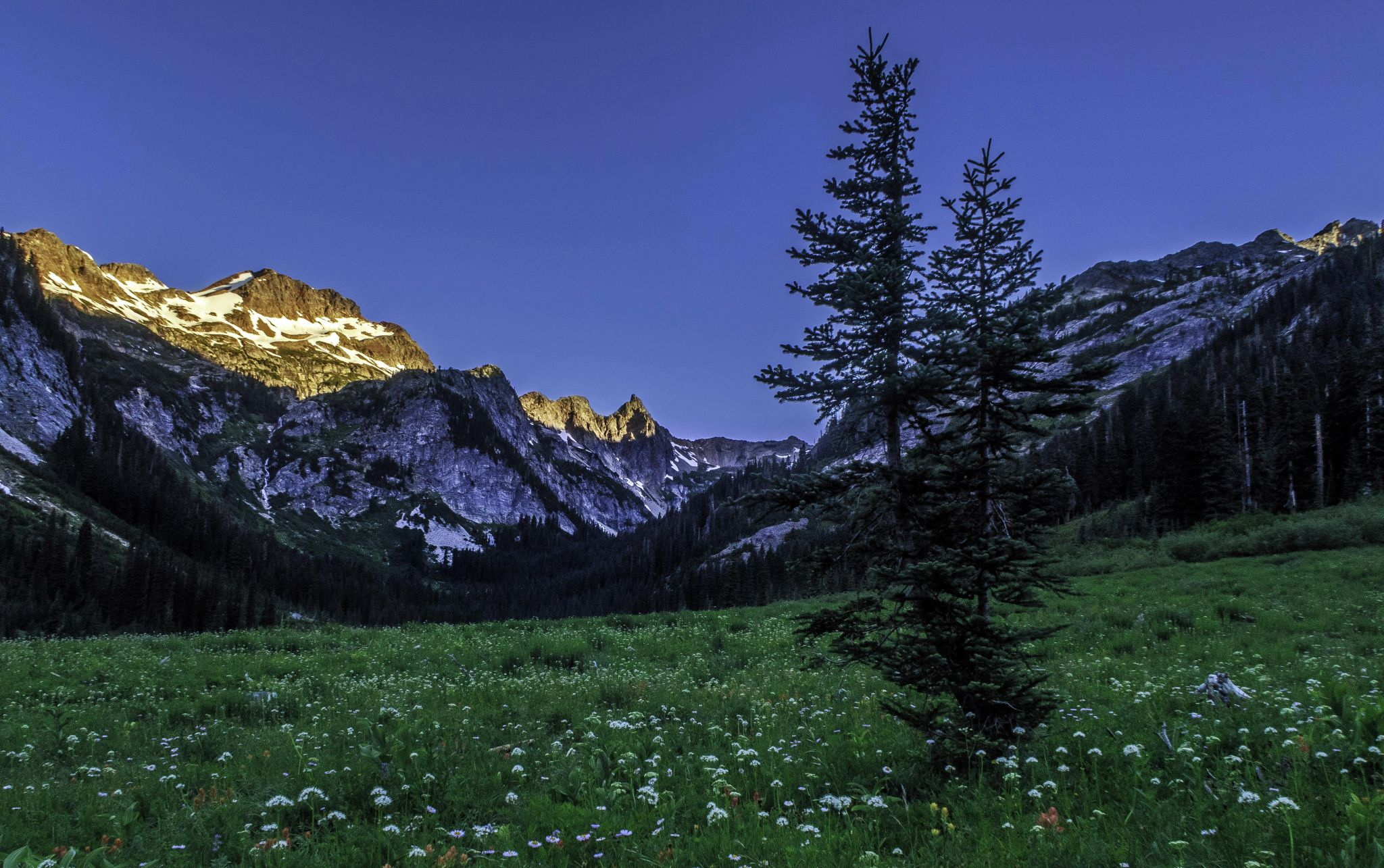 Spider Meadow 1, USA