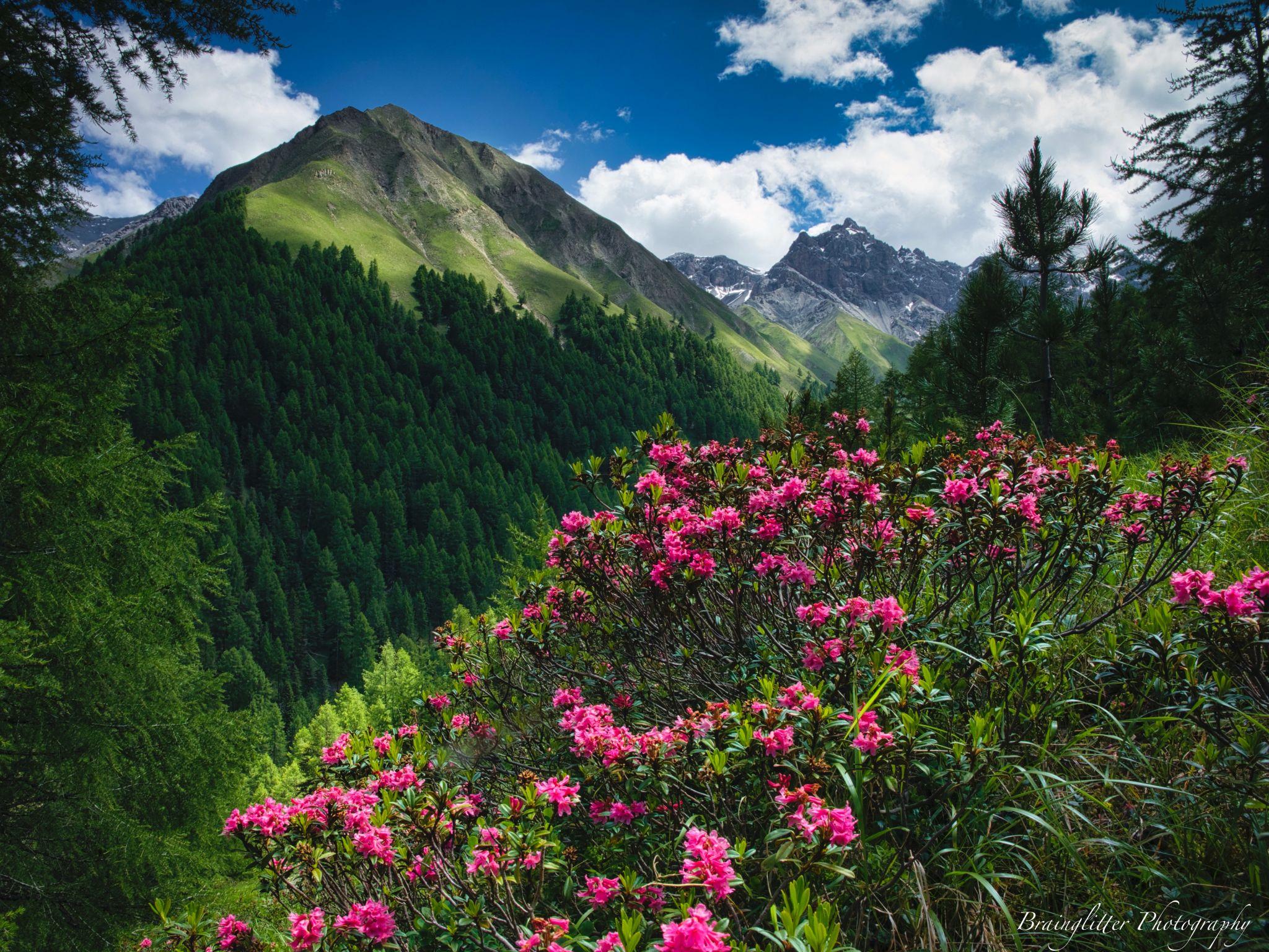 Swiss Nationalpark Trupchun valley, Switzerland