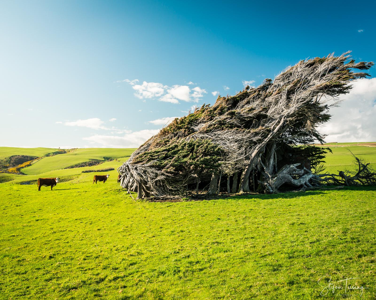 Windy Catlins, New Zealand