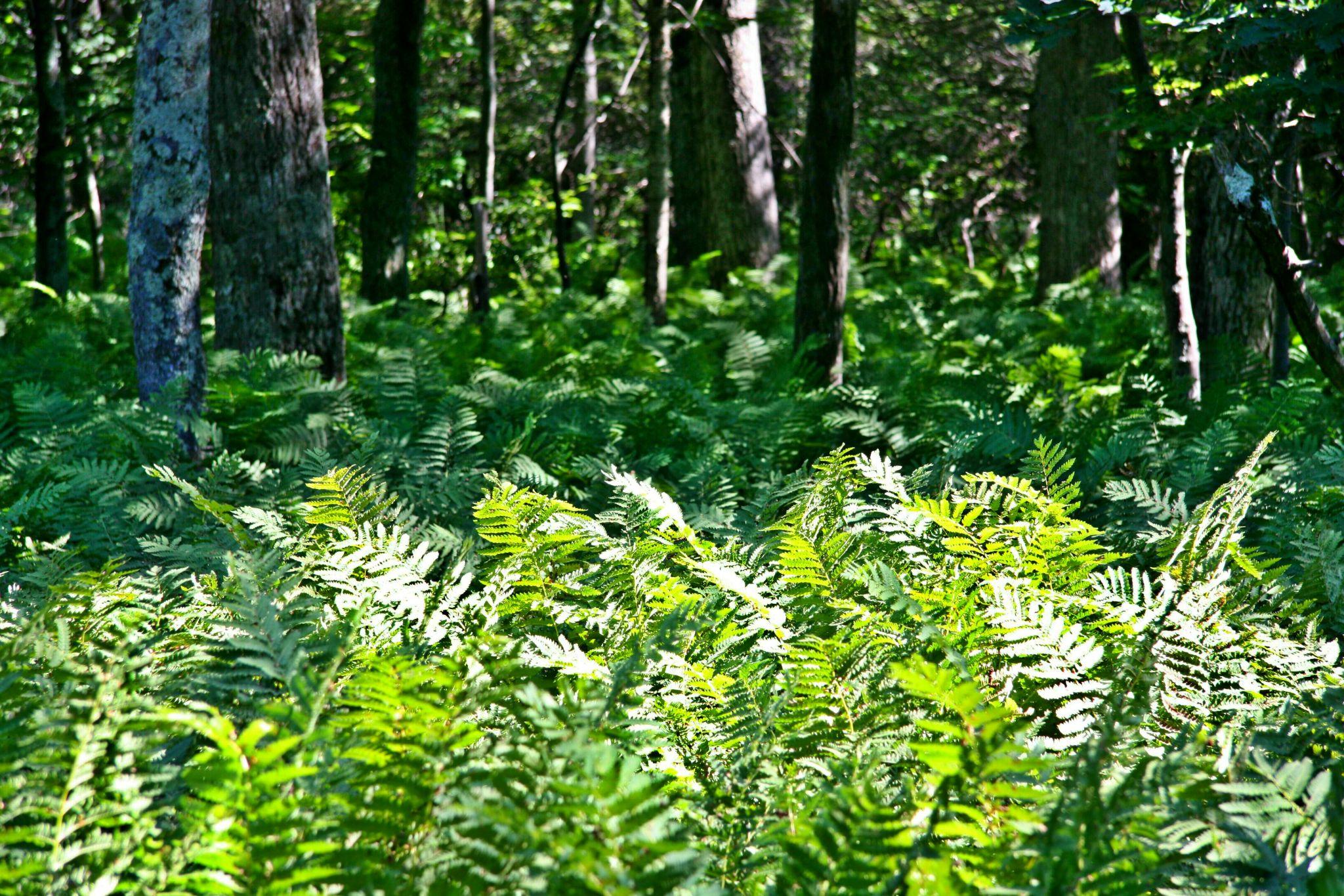 im Shenandoah National Park, USA