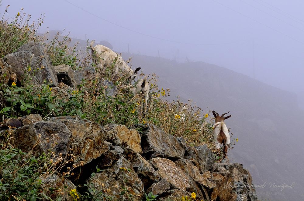 Jabal Aswad, Saudi Arabia