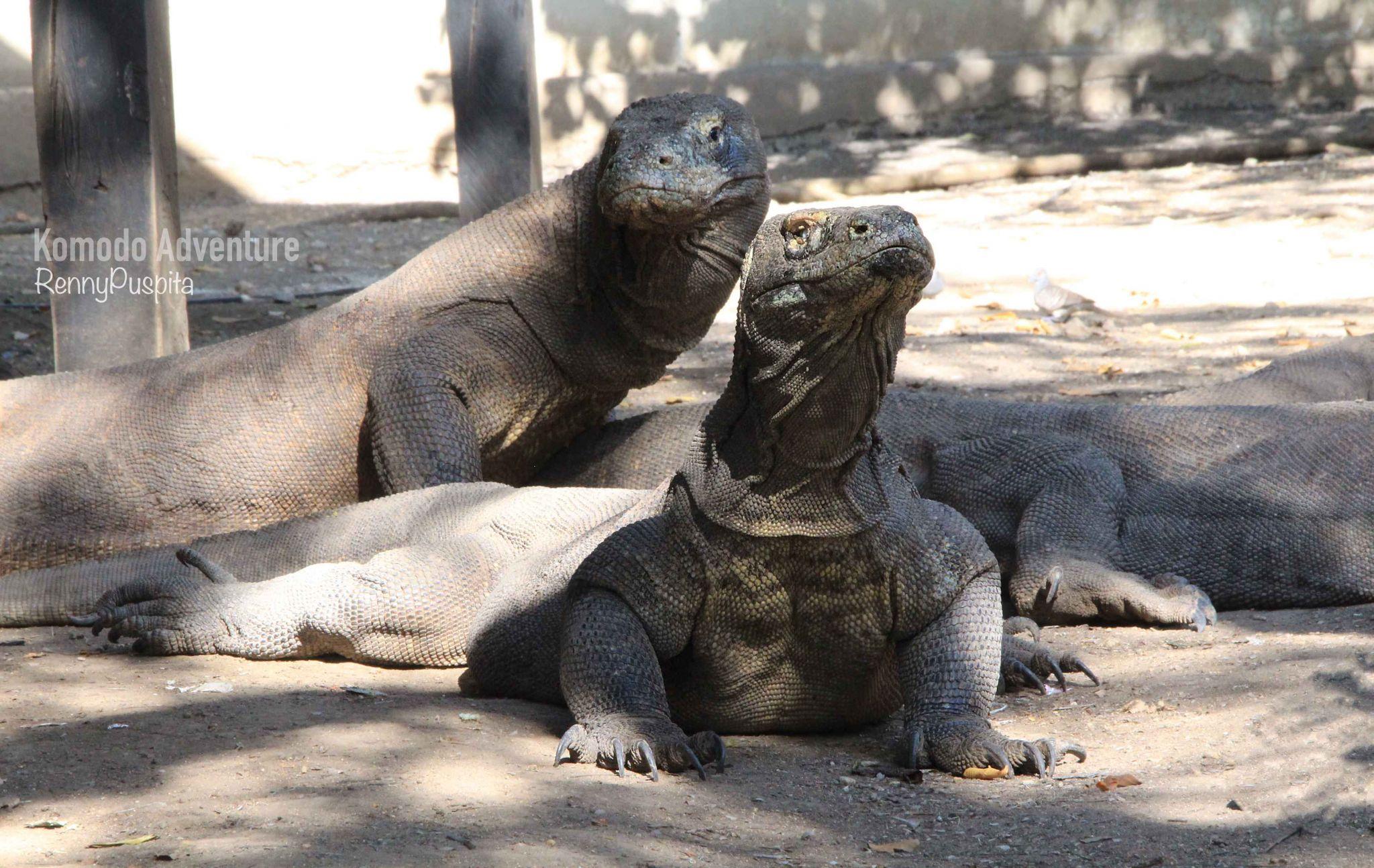 Komodo Island, Jurasic Park from Indonesia, Indonesia
