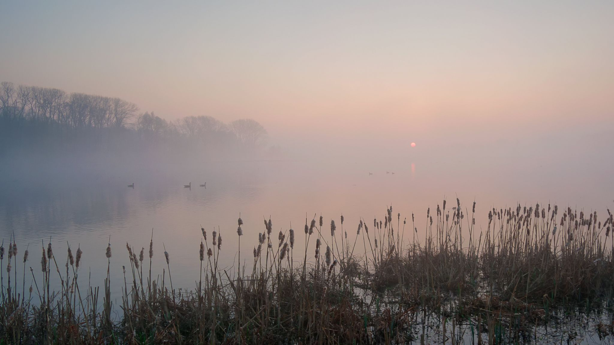 Misty sunrise in nature reserve Bourgoyen, Belgium., Belgium