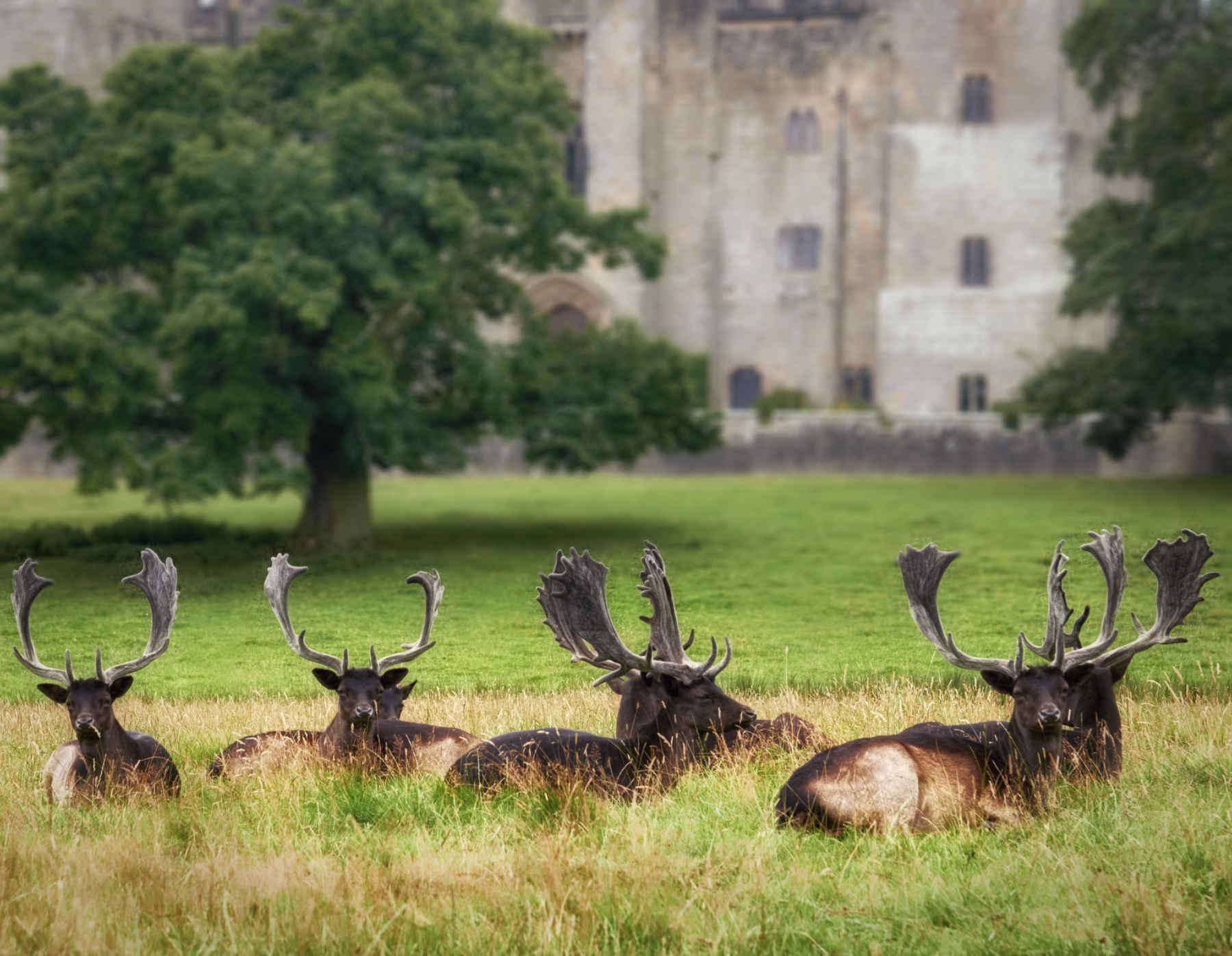 Raby Castle, United Kingdom