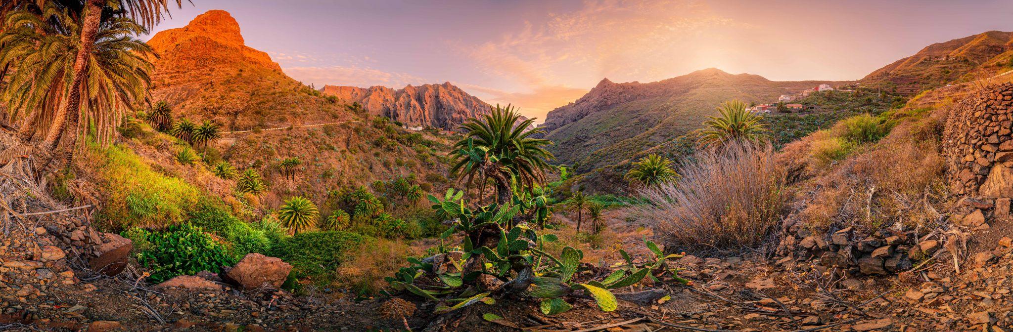 Masca Cactus Tenerife, Spain