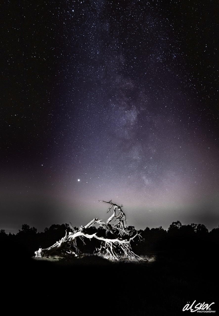 Milky Way over Gnarly Tree, United Kingdom
