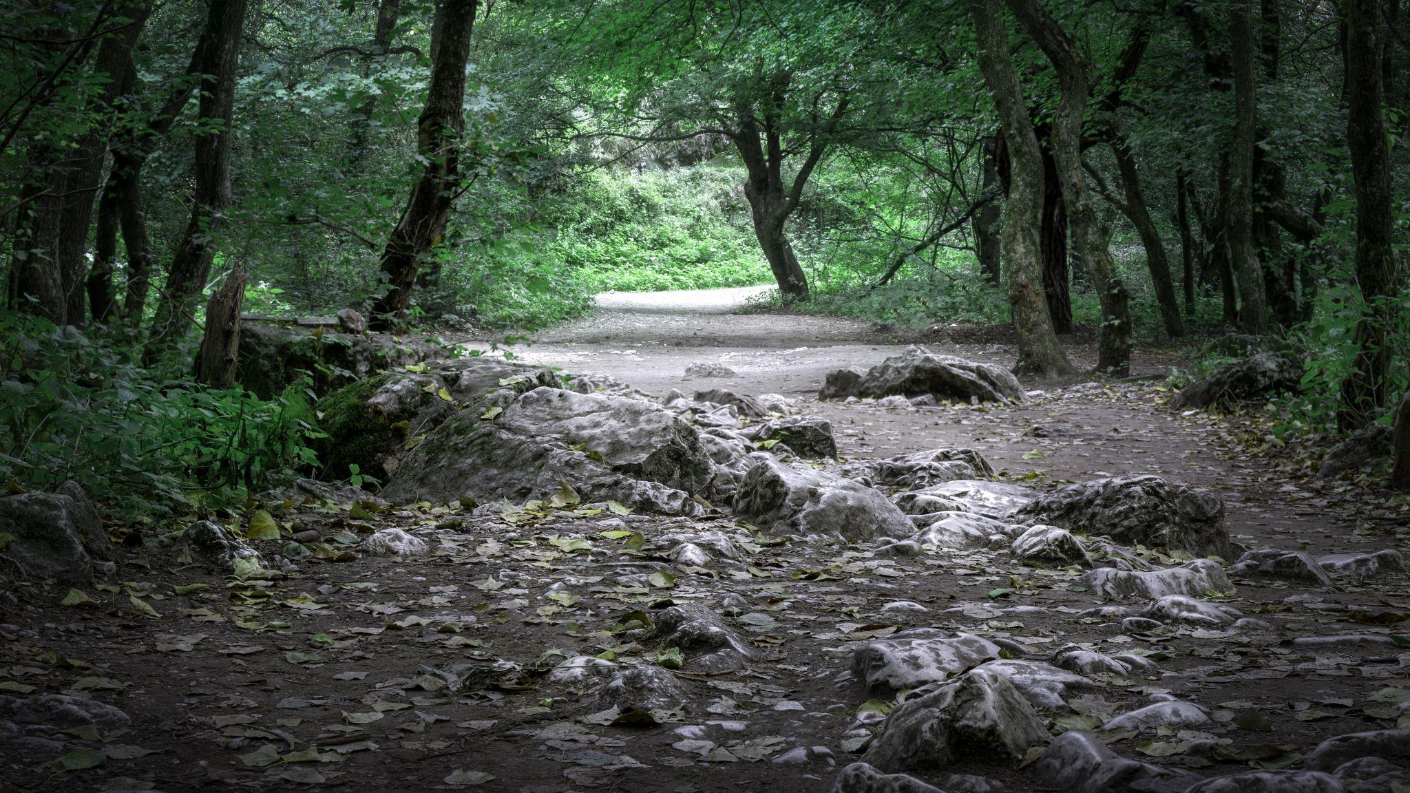 Turda Gorge Forest, Romania