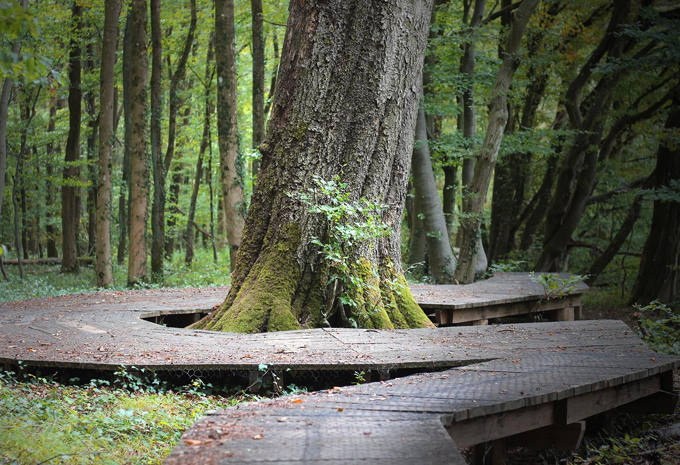 Waldweg der besonderen Art, Germany