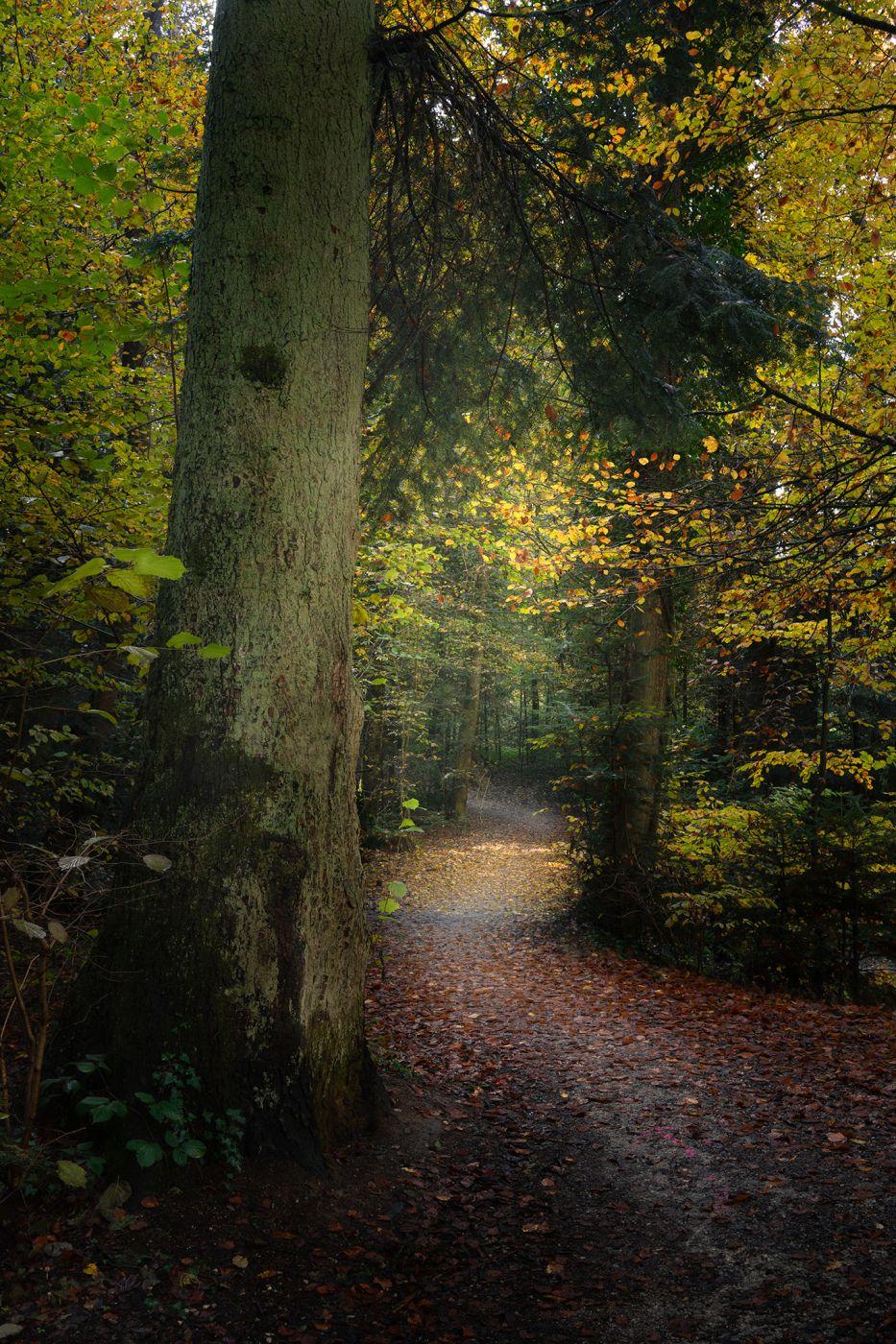 Forest in Bern, Switzerland