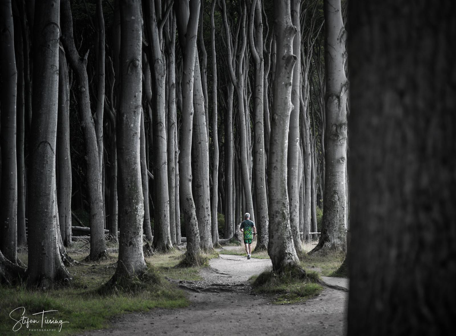 Gespensterwald near Nienhagen, Germany