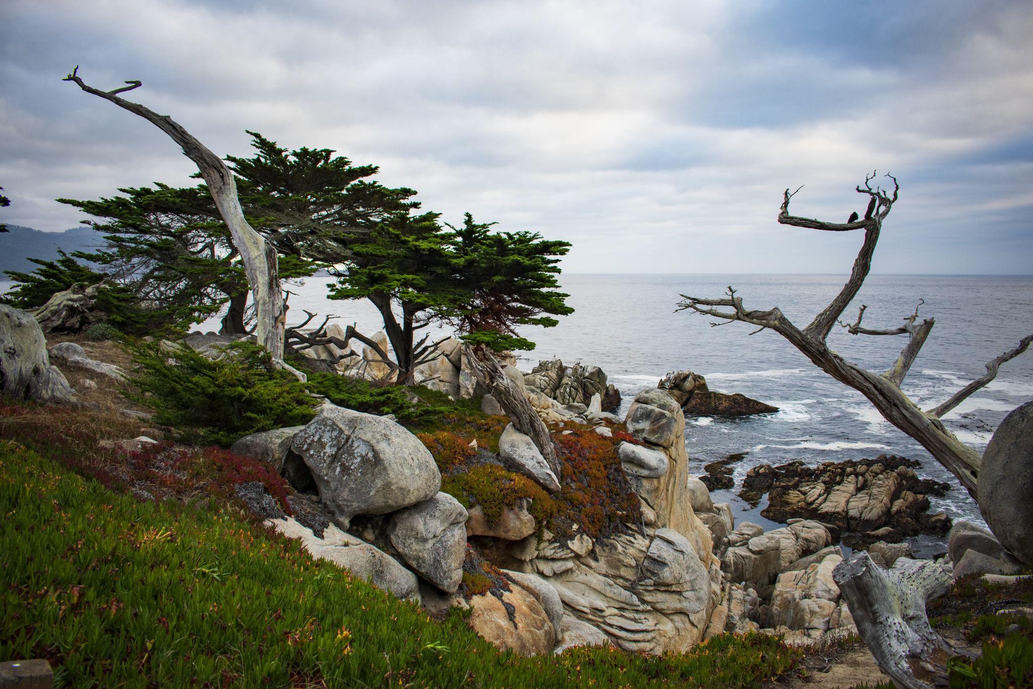 Ghost Tree, USA