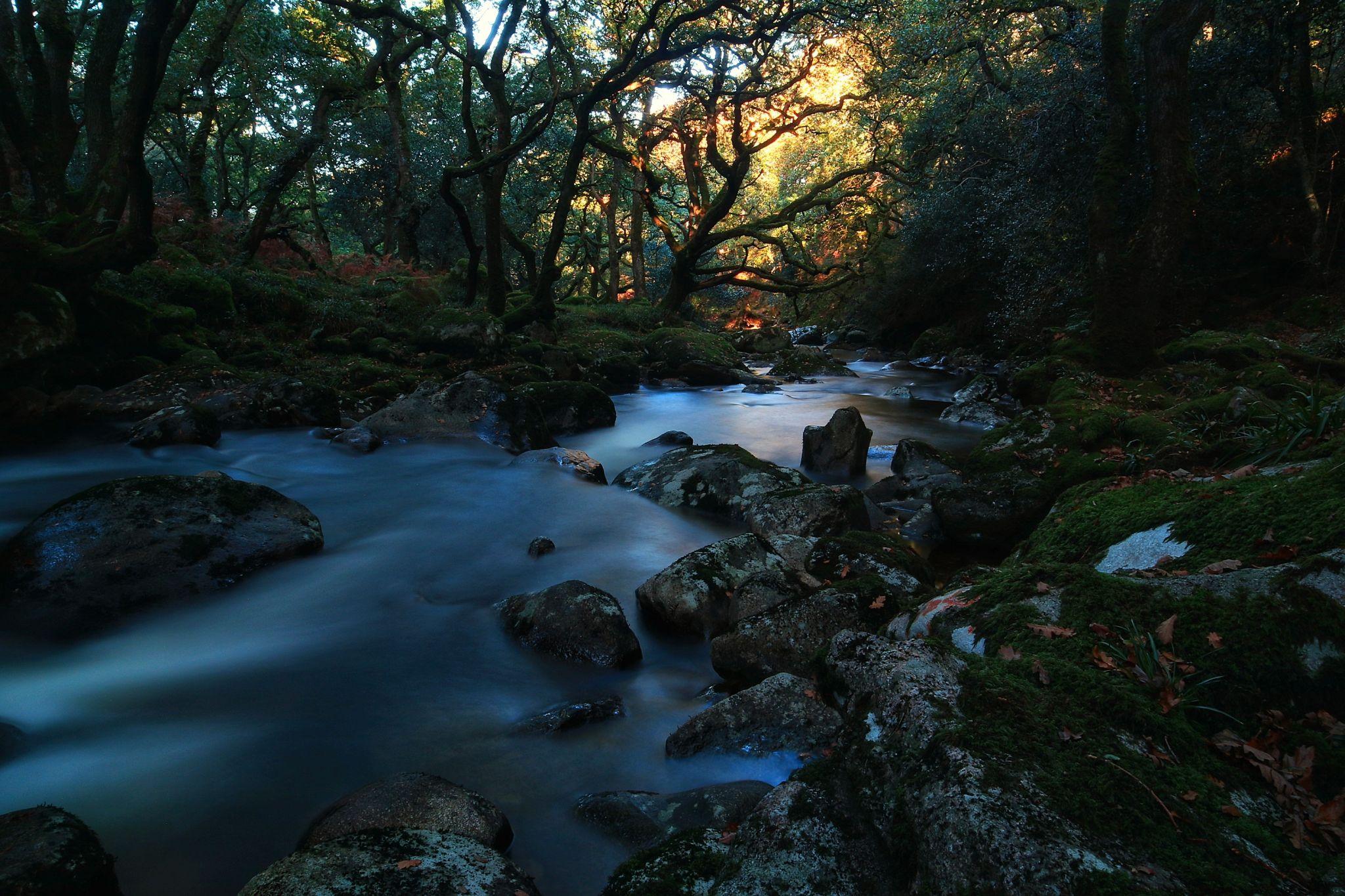 Shaugh prior river, United Kingdom