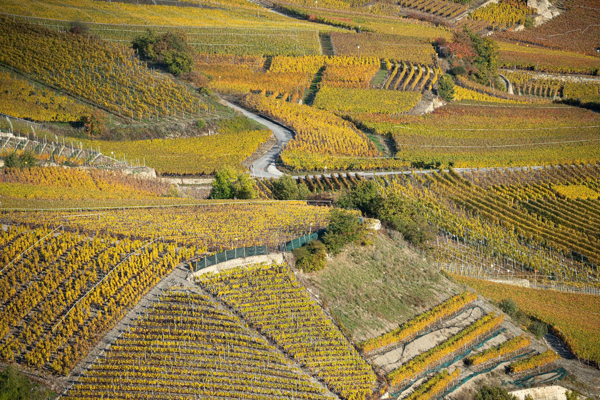 vineyards around Signèse, Switzerland