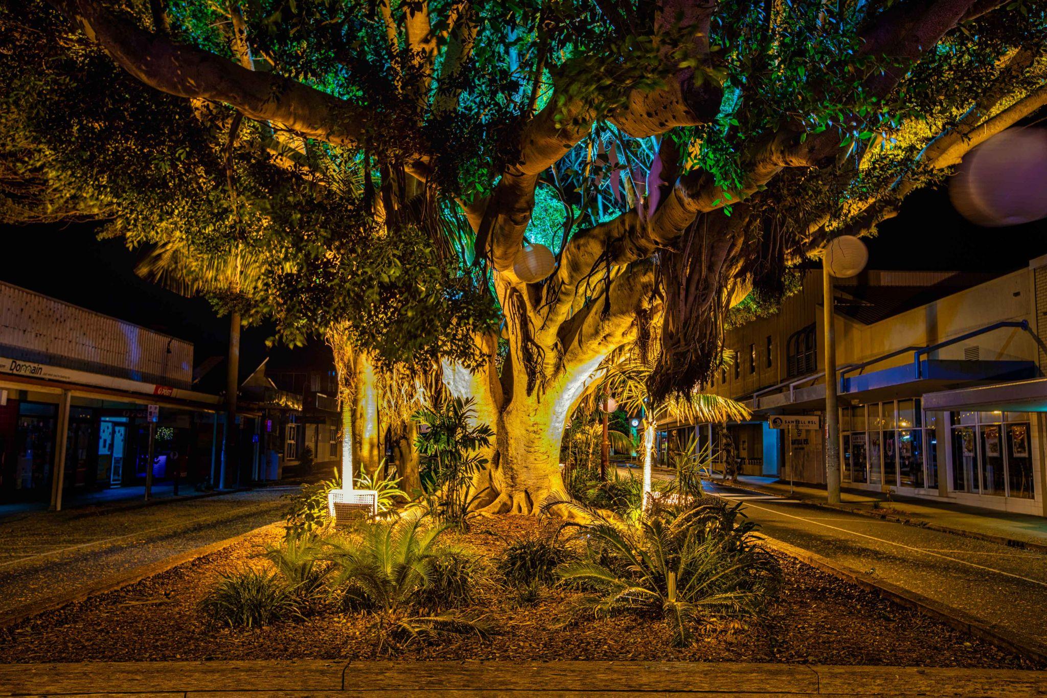 Blue hour Sawtell Main street North Coast NSW, Australia