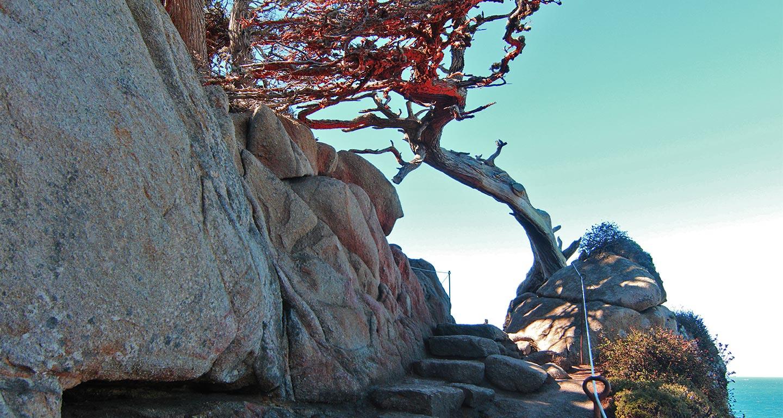 Cypress Grove Trail, USA