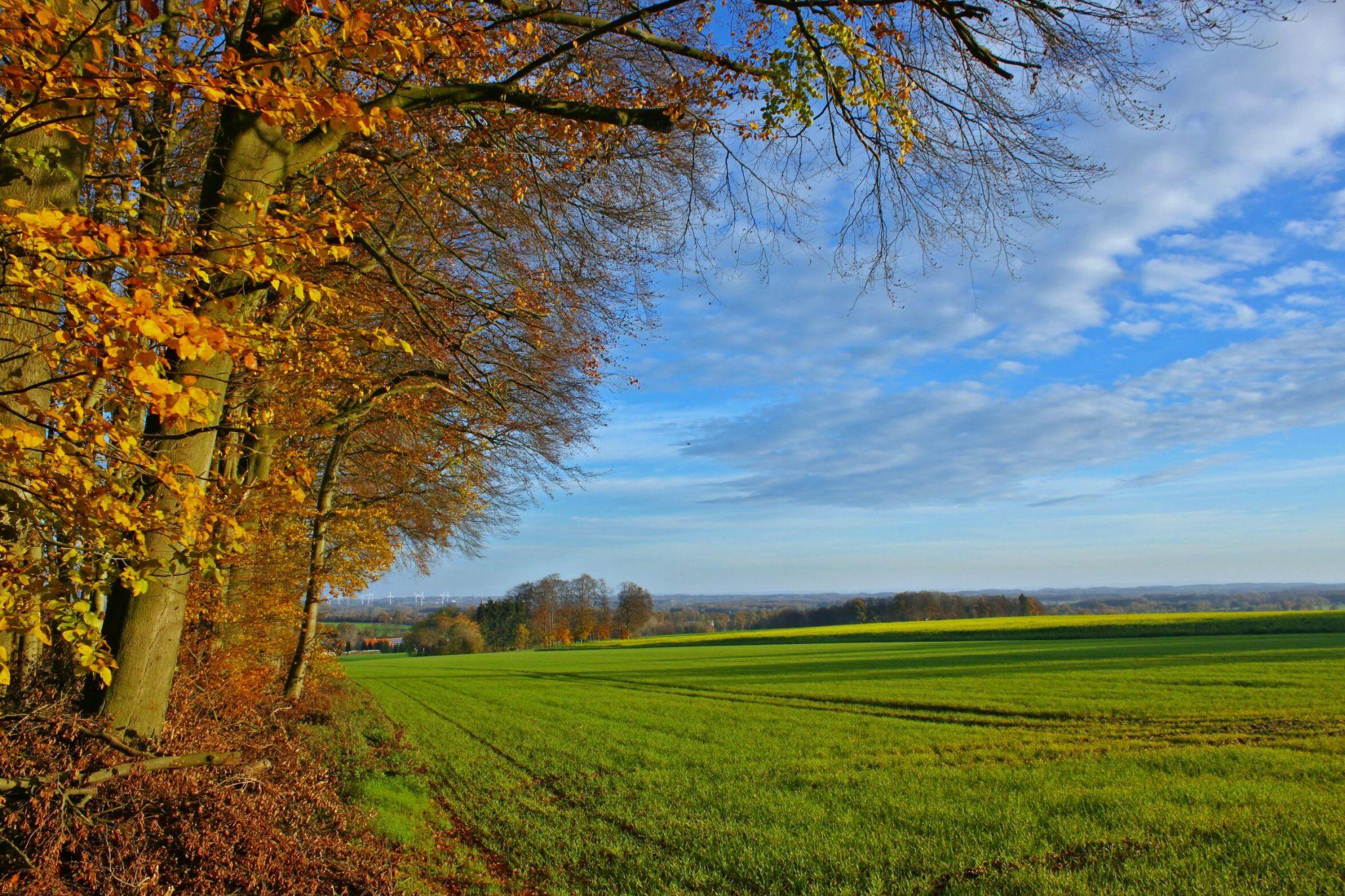 Herbst in den Baumbergen, Germany