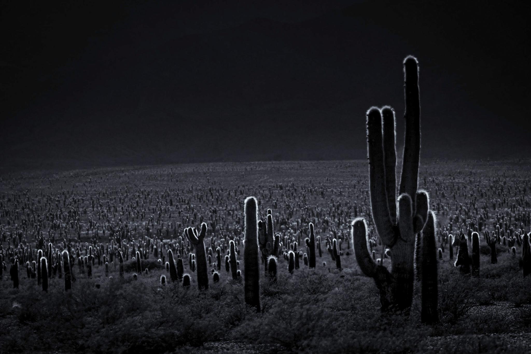 Parque Nacional los Cardones, Argentina