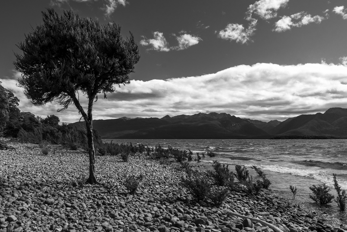 Shoreline on Lake Te Anau, New Zealand