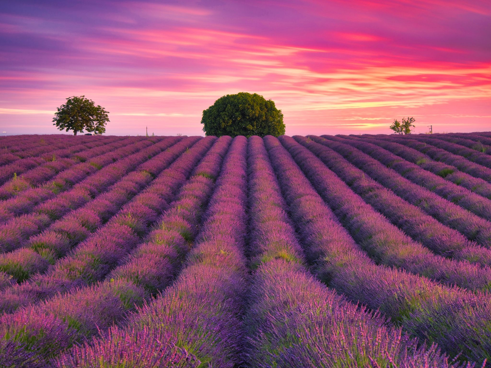 Valensole - The 3 Sisters, France