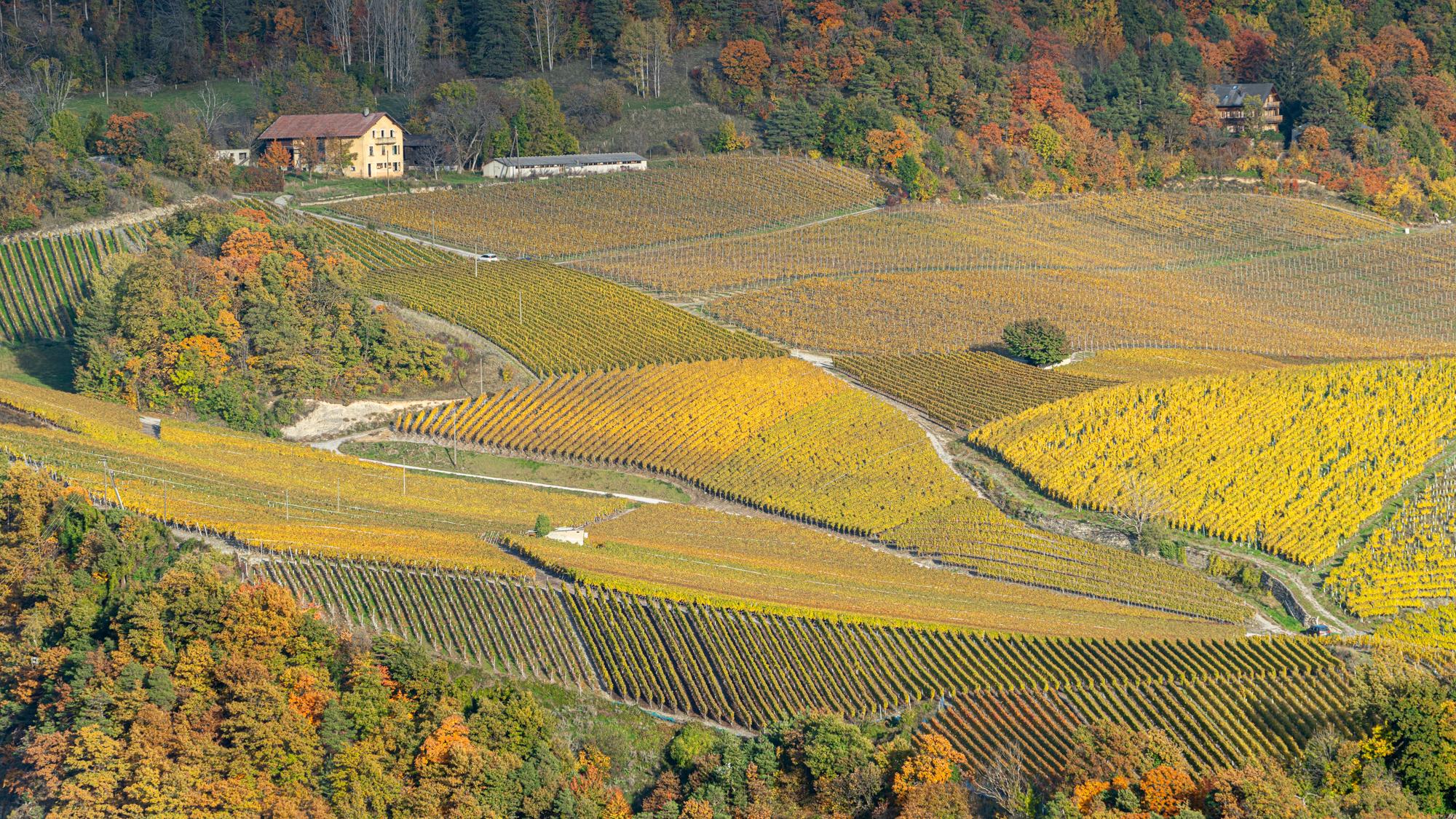 Vignes de Lens, Switzerland