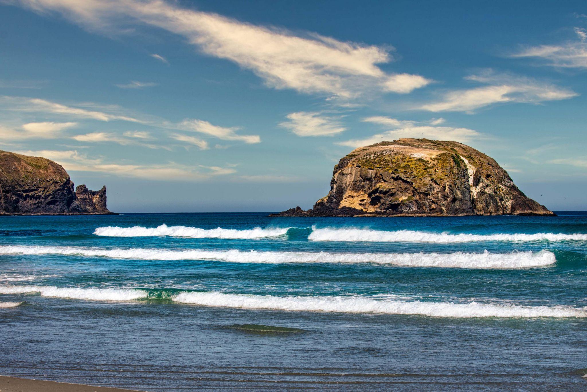 Wharekakahu Island, Allans Beach, Cape Saunders,, New Zealand