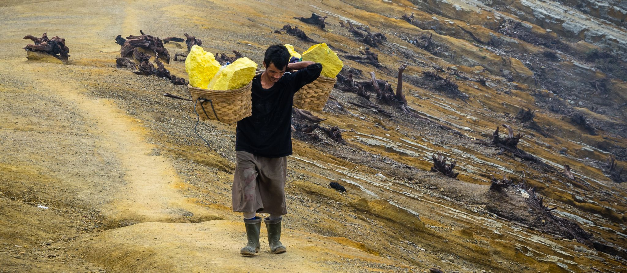 Appreciation of the sulfur carriers at Ijen volcano, Indonesia