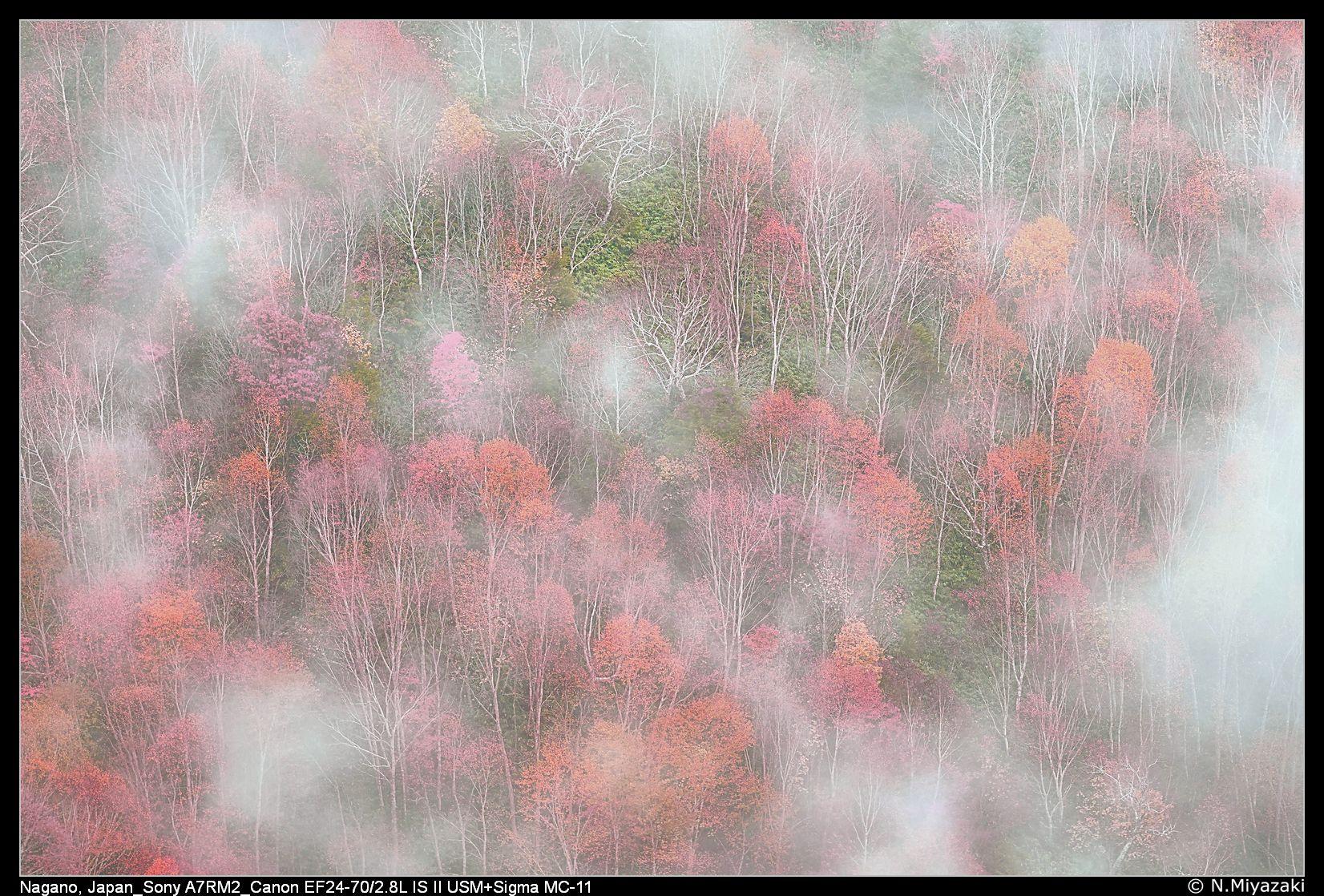 志賀高原, Shiga-Kogen, Japan