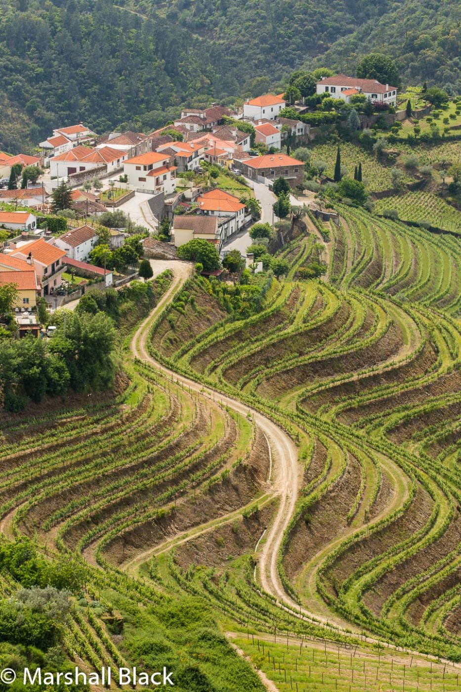 Vale de Mendiz, Alto Douro, Portugal