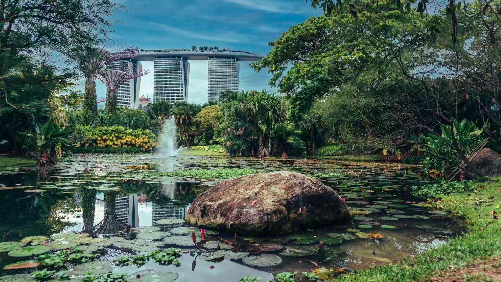 Water Lily Pond, Singapore