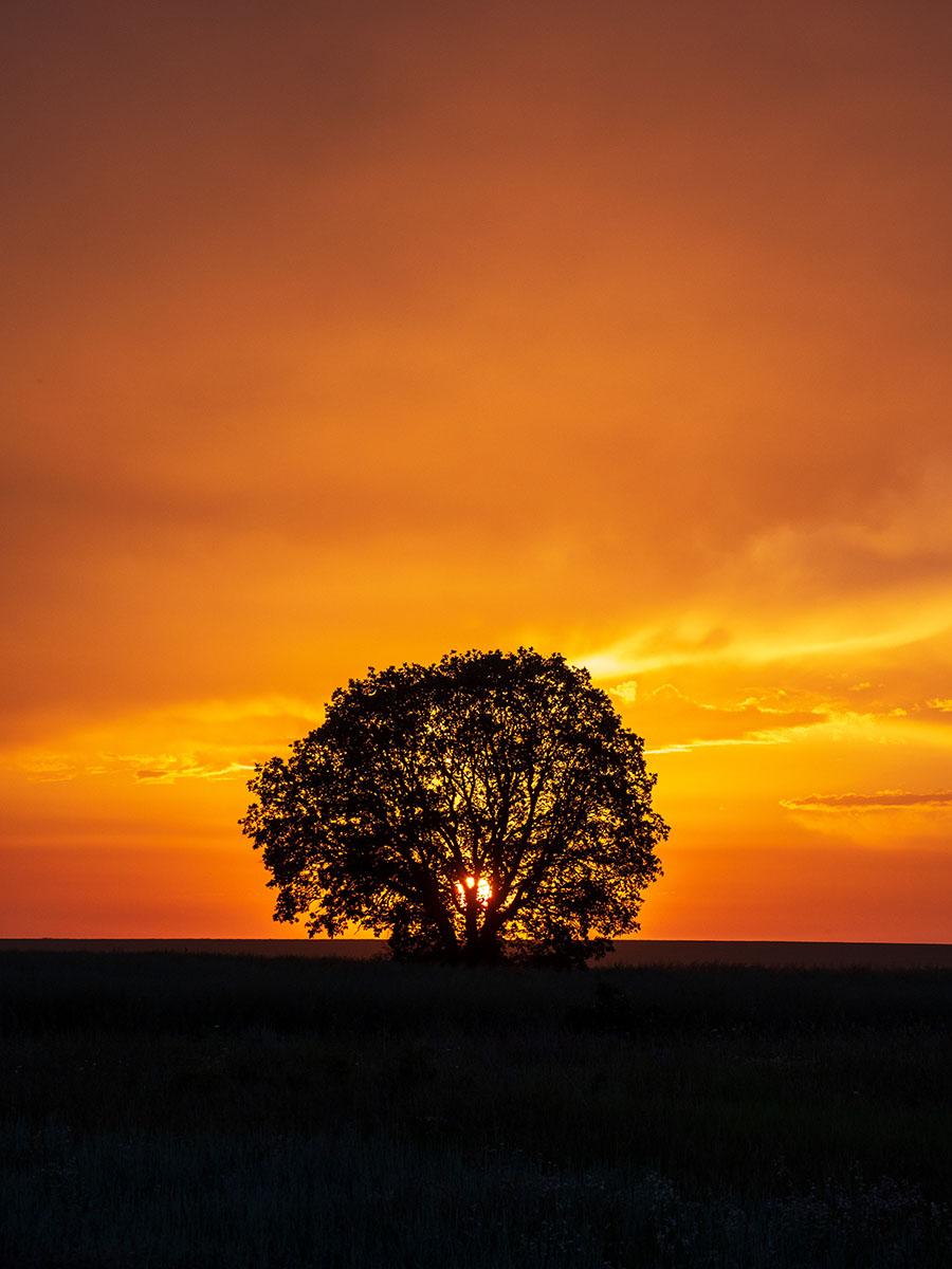 Izvorsko - Lonely Tree, Bulgaria