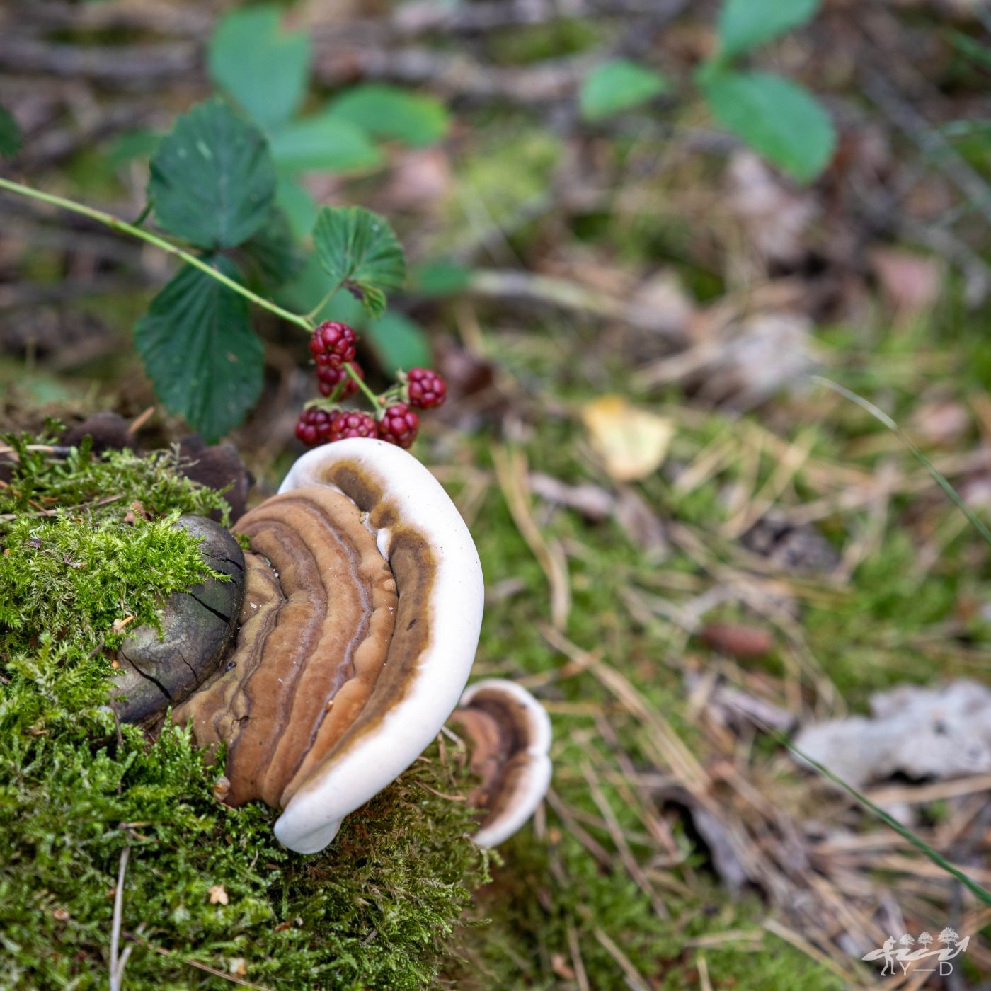 Parc national de Haute Campine - Mechelse heide, Belgium